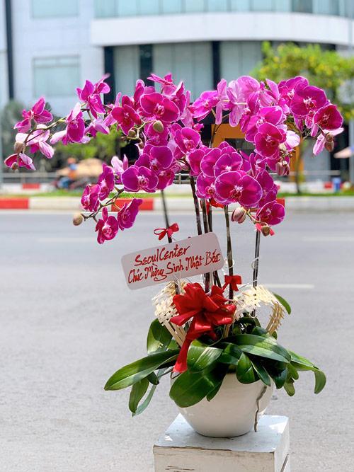Lẵng hoa lan hồ điệp để bàn chúc mừng khai trương, sinh nhật